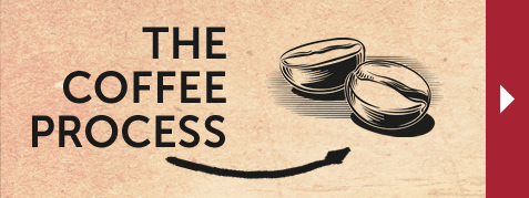 The Coffee Process