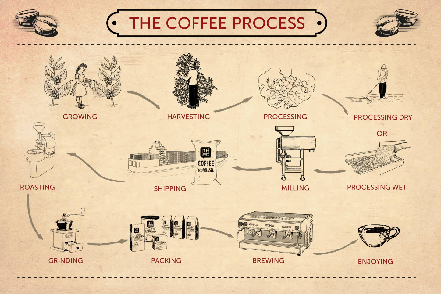 The Coffe Process